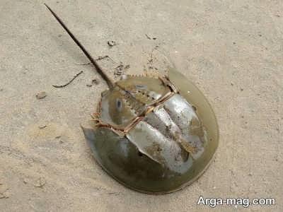 آشنایی با واقعبیت هایی درمورد خرچنگ