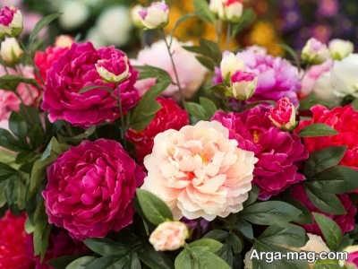 انواع گل های مناسب فصل بهار