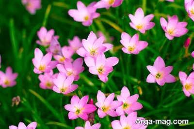 آشنایی با گیاهان بهاری