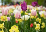 آشنایی با گل های مناسب فصل بهار