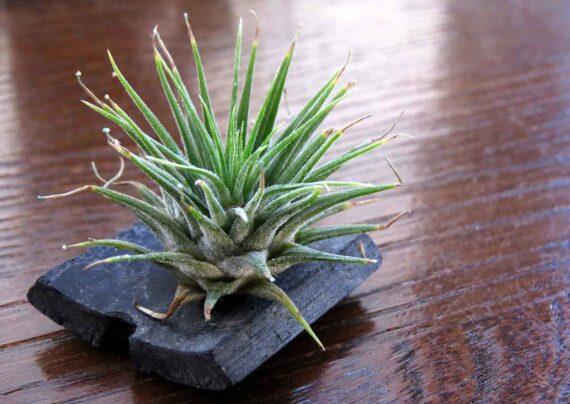 آشنایی با پرورش گیاه بدون خاک