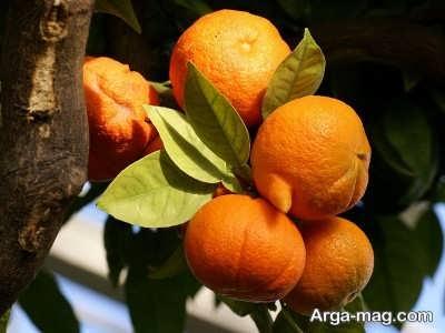 تعبیر دیدن نارنج از دیدگاه معبرین مختلف