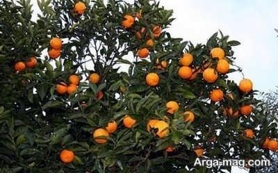 تعبیر خواب نارنج بیانگر چیست ؟