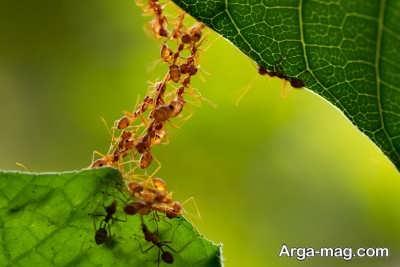 روش های خانگی برای دفع مورچه ها