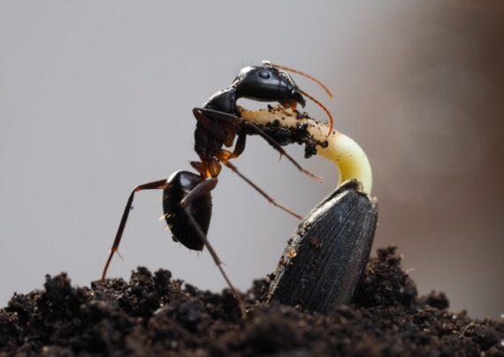 آشنایی با نحوه دفع مورچه از خاک گلدان