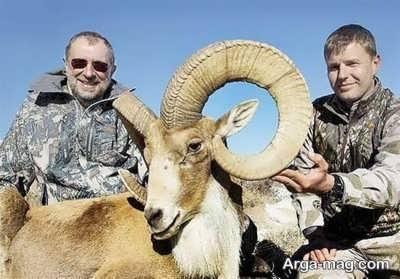 آشنایی با حکم شرعی شکار در حالات و شرایط مختلف