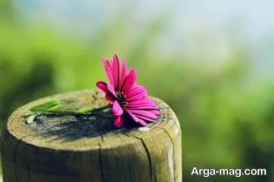 جمله های کوتاه در مورد مهربانی