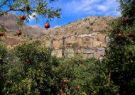 پوشش گیاهی و متنوع آبادی ژیوار