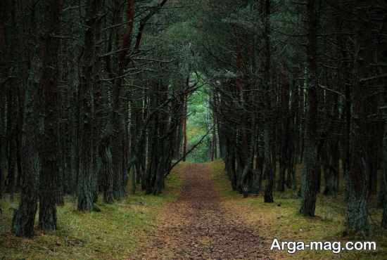 آشنایی با جنگل رقصان