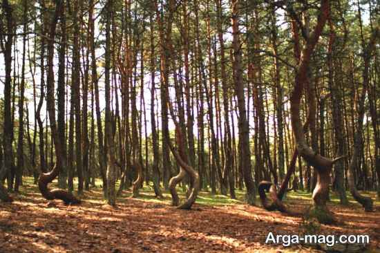 جنگل های رقصان روسیه