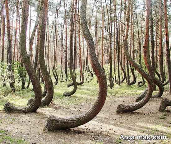 جنگل های دیدنی رقصان