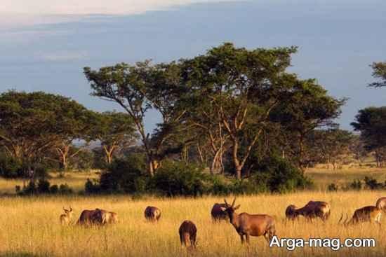 حیات وحش اوگاندا