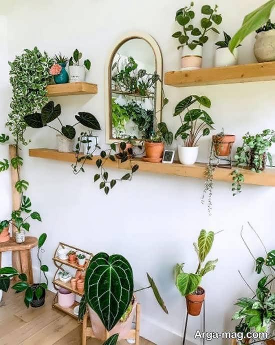 ایده های زیبای از شلف دیواری برای گلدان
