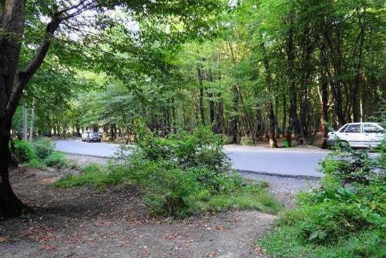 باغ جنگلی النگ دره زیبا و سرسبز