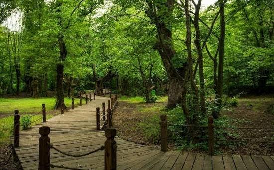 معرفی پارک جنگلی النگ دره