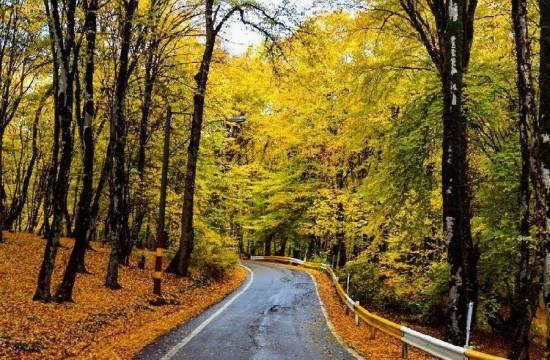 پارک جنگلی النگدره گرگان با مسیرهای چوبی و آسفالت