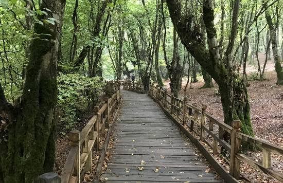 آشنایی با باغ جنگلی النگ دره