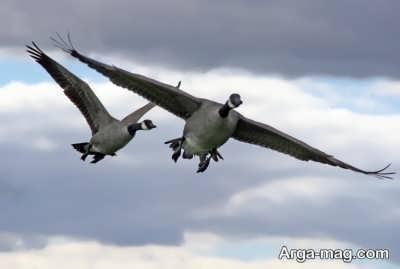 متن ناب در مورد پرواز