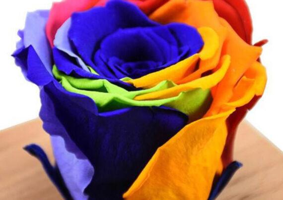 آشنایی نحوه ساخت گل رز جاودان
