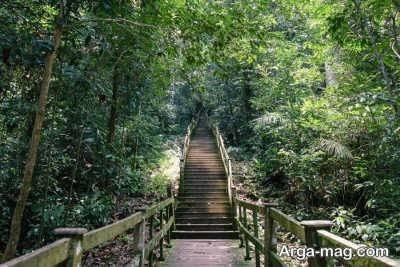 بازدید از پارک ملی در برونئی