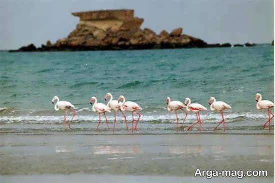 جزیره ناز فاقد ساحل شنی