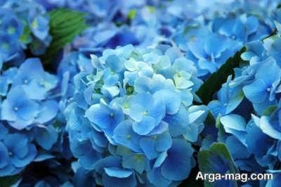 انشا درباره گل