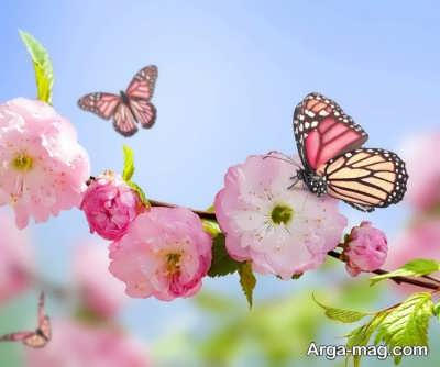 انشایی در مورد گل