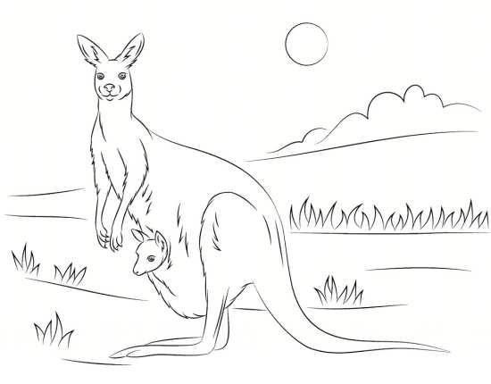 نقاشی کانگورو برای بچه ها