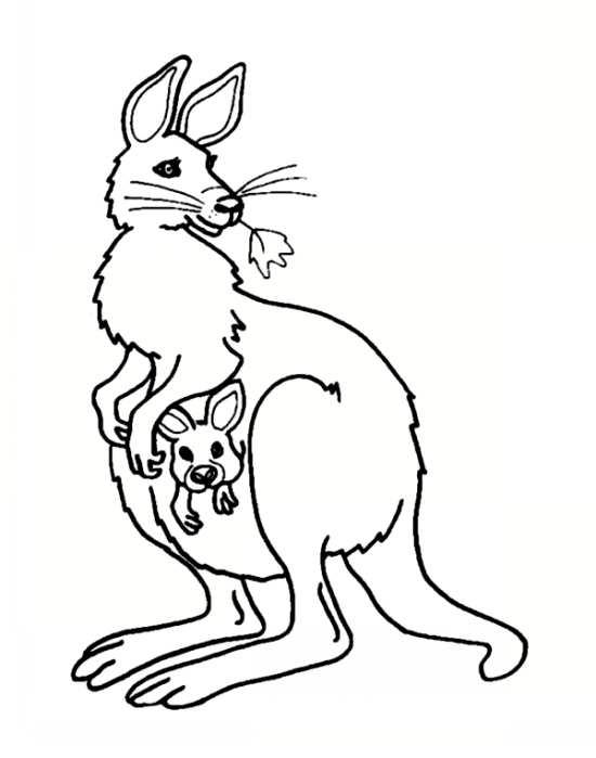 نقاشی جالب کانگورو