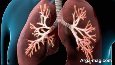 آشنایی با آناتومی شش و عملکرد ریه