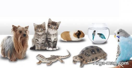 حیوانات خانگی آرام و سازگار برای کودکان