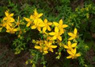 آشنایی با نحوه کاشت گل راعی