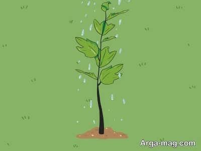اصول کاشت بذر چنار