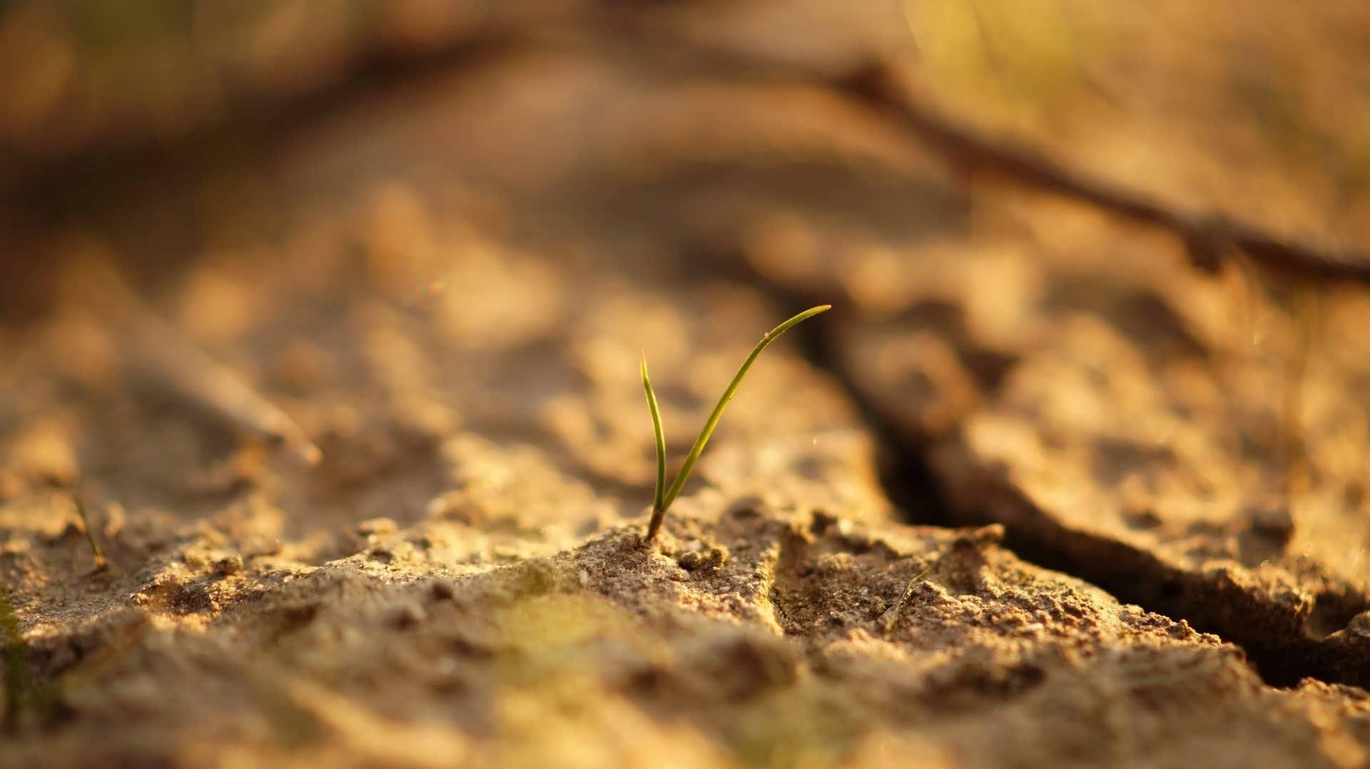 آشنایی با آفات خاک گلدان