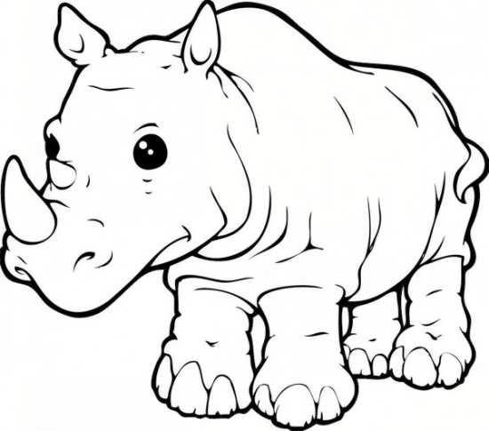 نقاشی کرگدن برای بچه ها