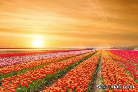 تصاویر جالب فصل بهار در طبیعت