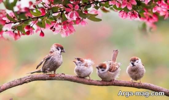 انواع تصاویر فصل بهار