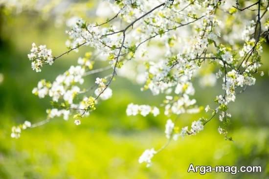 عکس فصل بهار بسیار باحال و جذاب