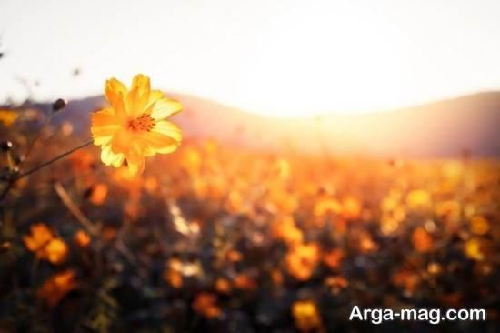 تصویر جذاب فصل بهار