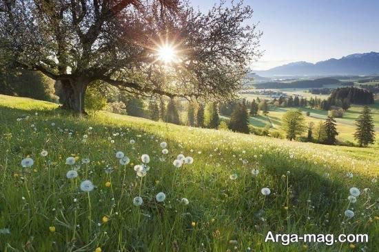 عکس فصل بهار از طبیعت سرسبز