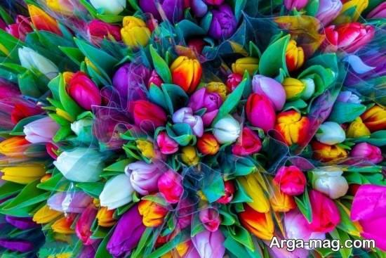 انواع زیبا تصویر فصل بهار