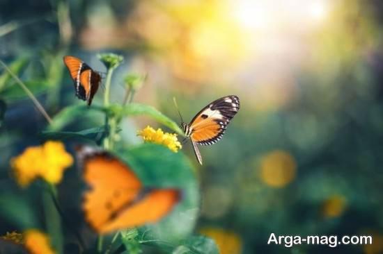 عکس فصل بهار بسیار دلنشین