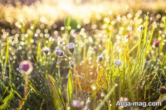 عکس های شخصی فصل بهار