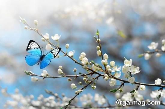 تصاویر زیبا و جدید فصل بهار