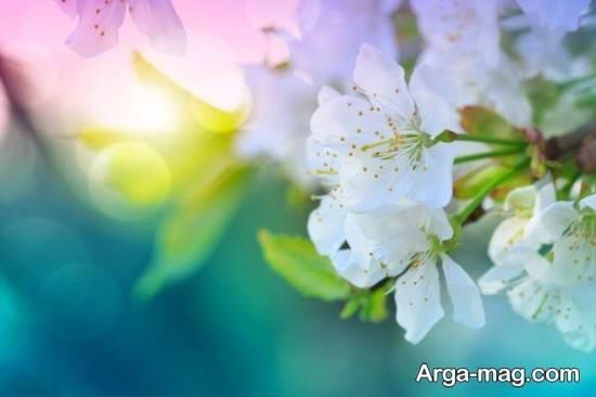 انواع تصویر پروفایل فصل بهار