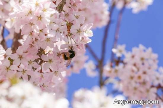 عکس جالب فصل بهار