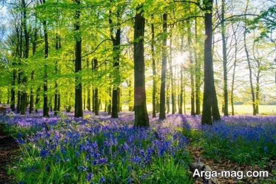 عکس جذاب فصل فصل بهار