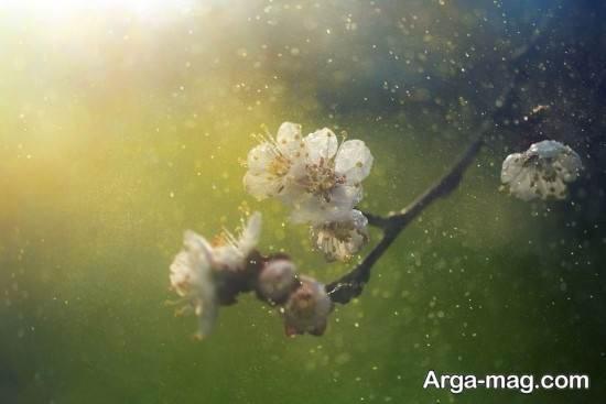 عکس فصل بهار برای پروفایل