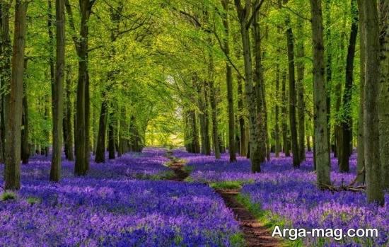 تصویر زیبا فصل بهار برای گروفایل