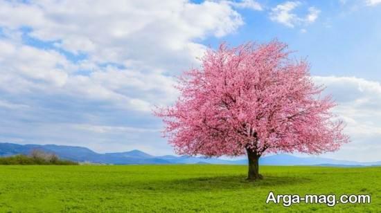 تصویر قشنگ از فصل بهار